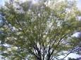 木の葉が春の日差しでキラキラしてる